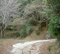 桂木林道 007